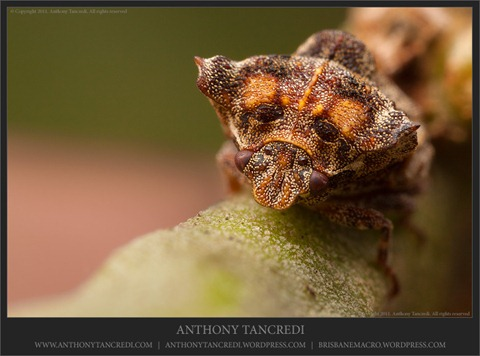 Tree hopper